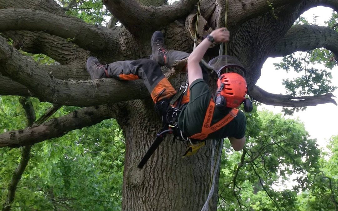 Your New Jersey Tree Experts