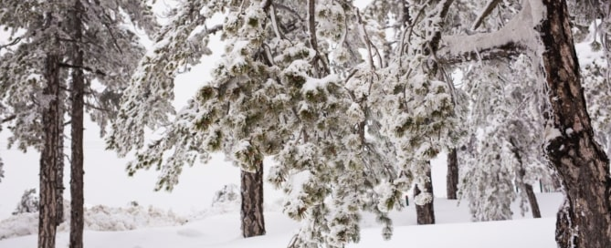 Winter Tree Care 101: How to Protect Your Trees This Winter