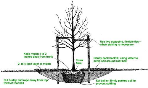 2015-12-21-tree-planting-proper