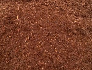hemlock-mulch