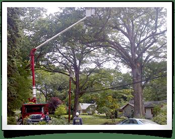 Tree Cranes