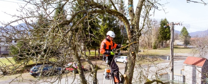 Why Your Tree Company Should Have Insurance
